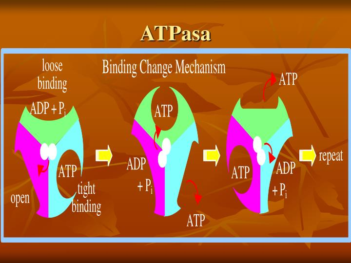 ATPasa