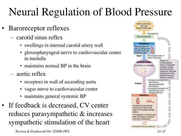 Neural Regulation of Blood Pressure