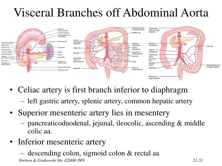 Visceral Branches off Abdominal Aorta