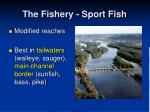 the fishery sport fish17