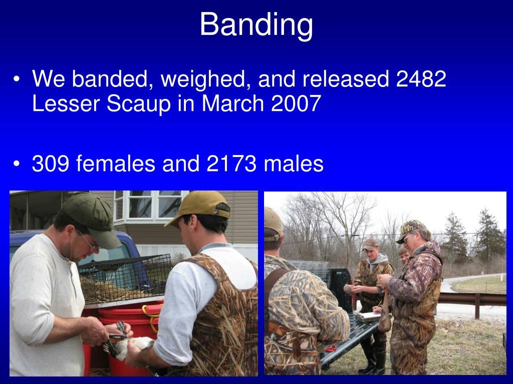 Banding