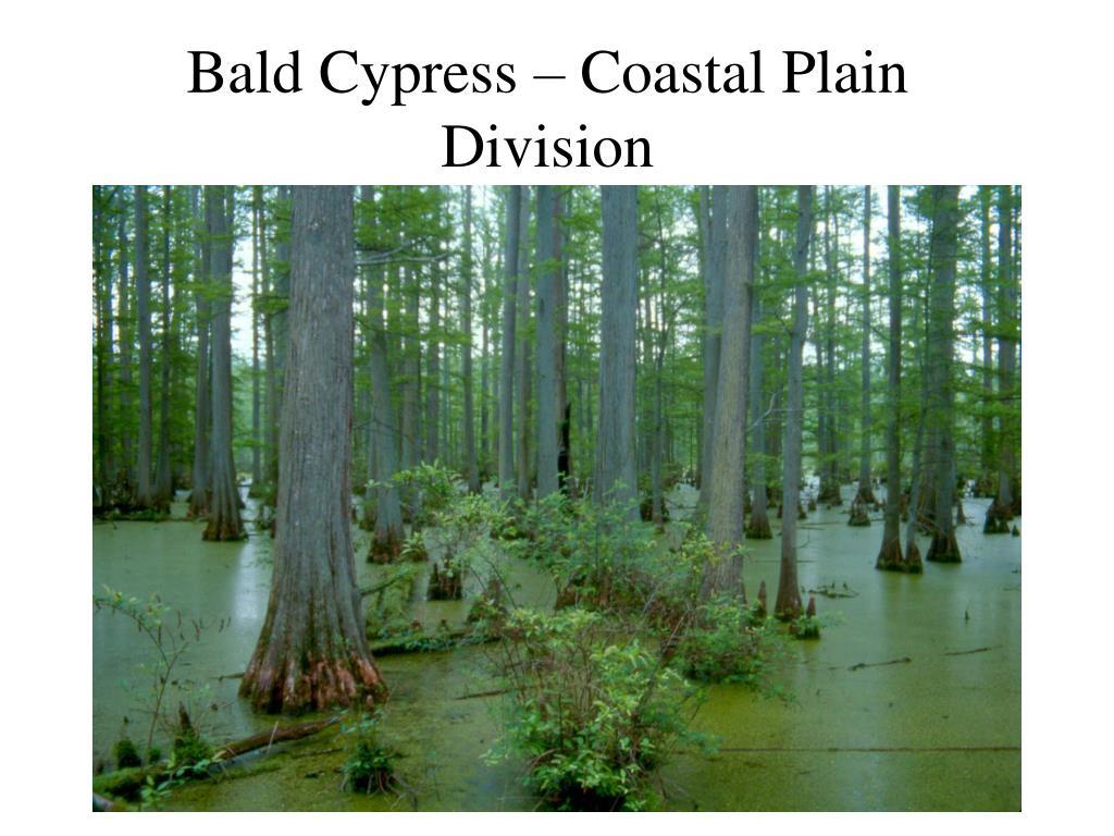 Bald Cypress – Coastal Plain Division