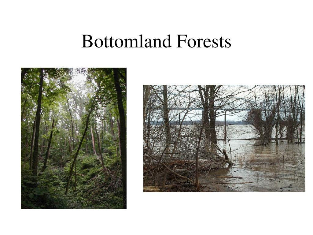 Bottomland Forests