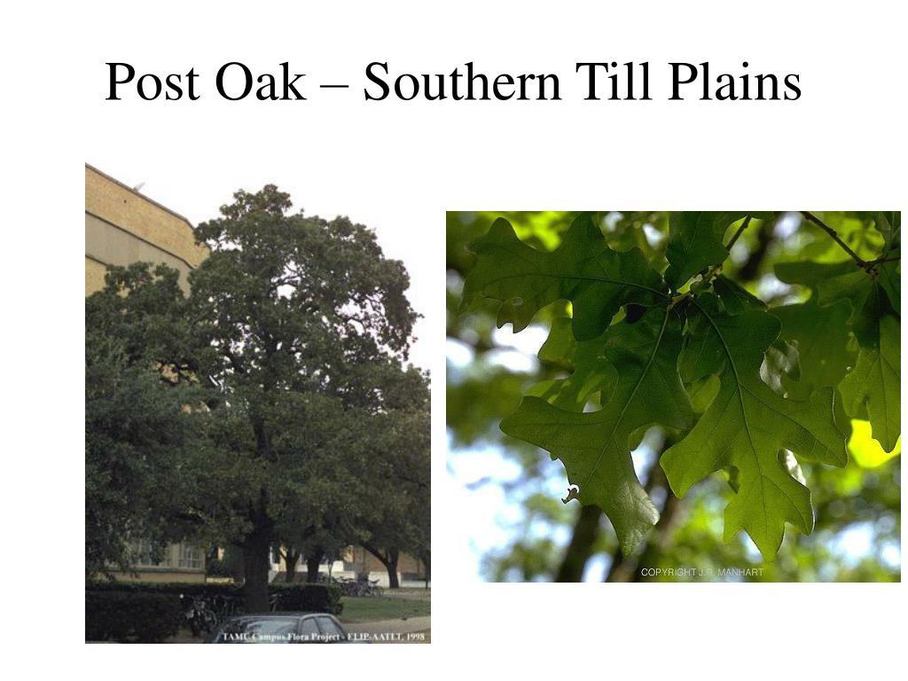 Post Oak – Southern Till Plains