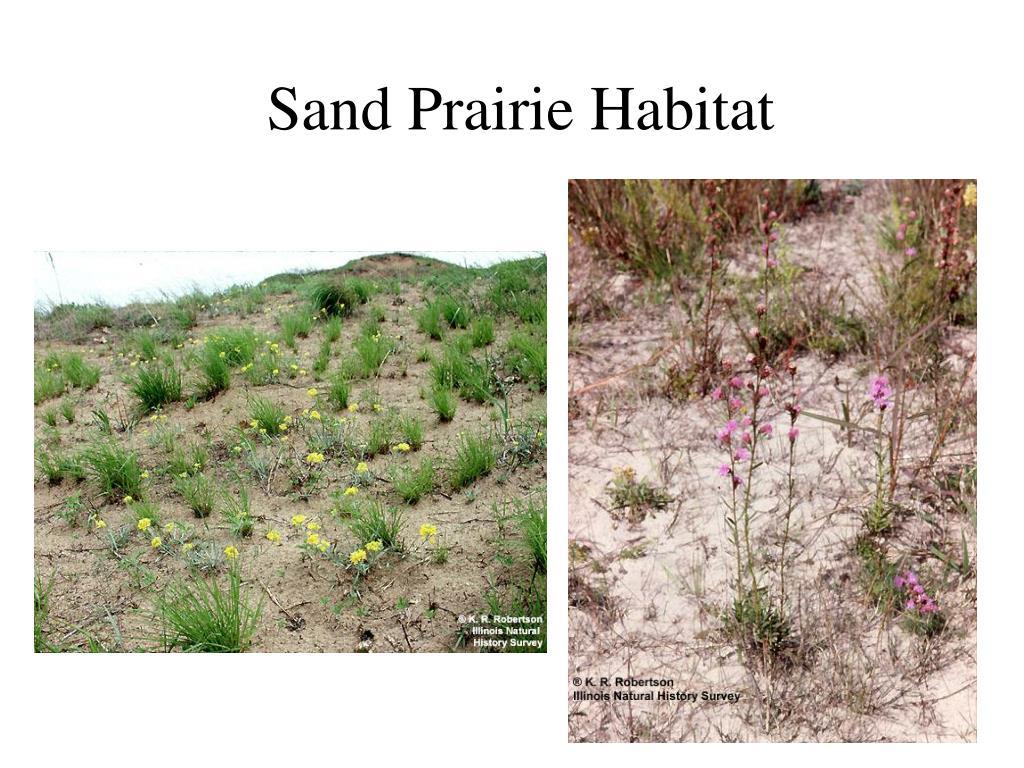 Sand Prairie Habitat