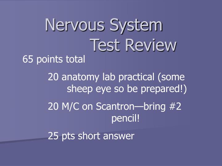 PPT - Nervous System PowerPoint Presentation - ID:852301