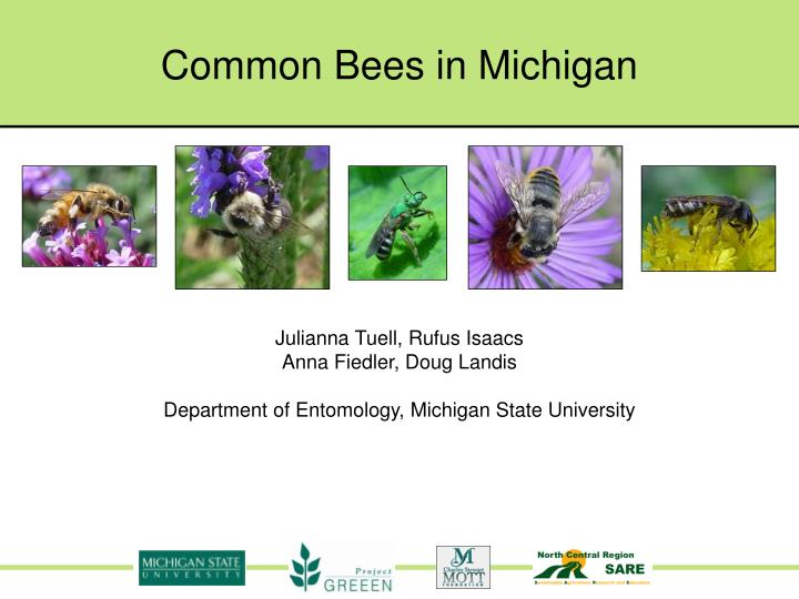 common bees in michigan n.