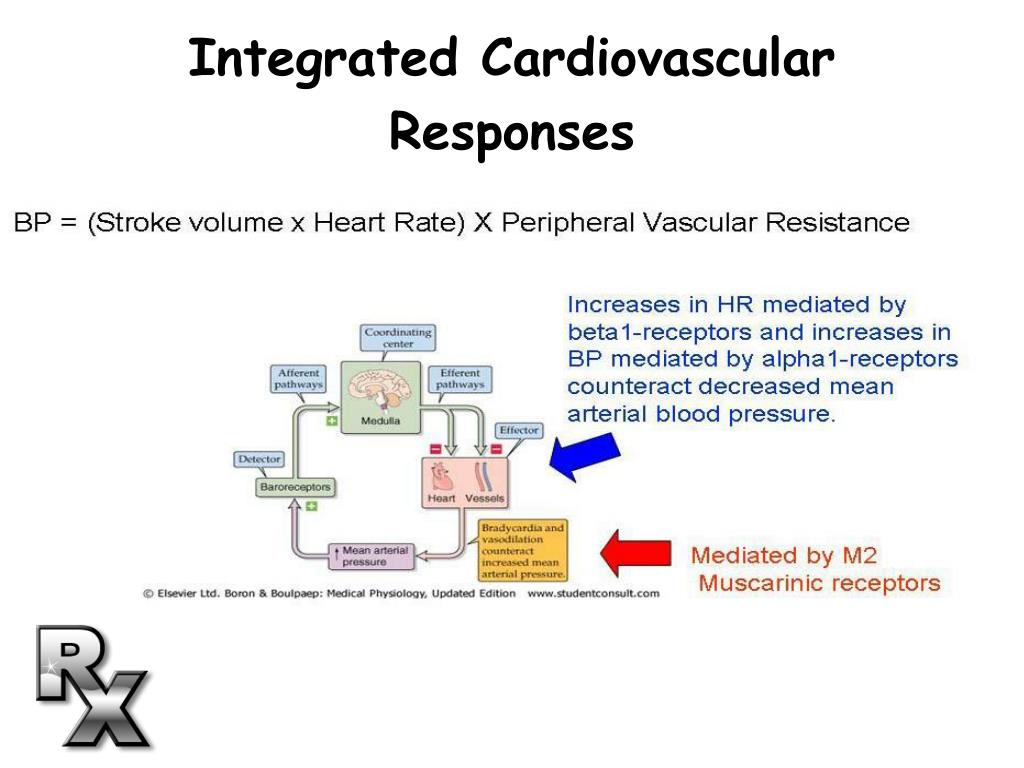 Integrated Cardiovascular Responses