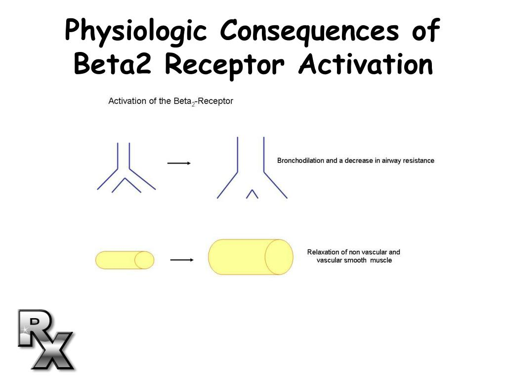 Physiologic Consequences of Beta2 Receptor Activation