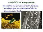nitrogen fixsion