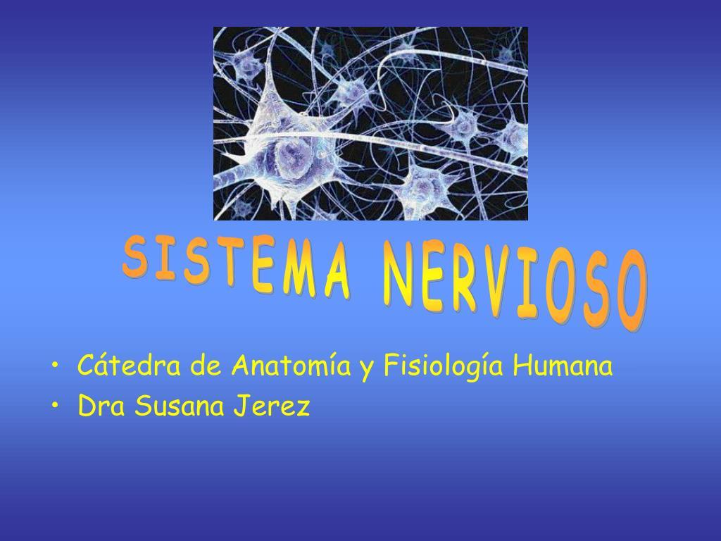 PPT - Cátedra de Anatomía y Fisiología Humana Dra Susana Jerez ...