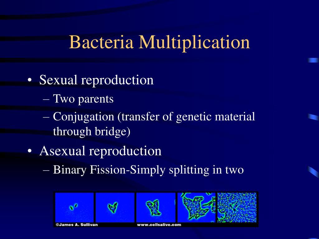 Bacteria Multiplication
