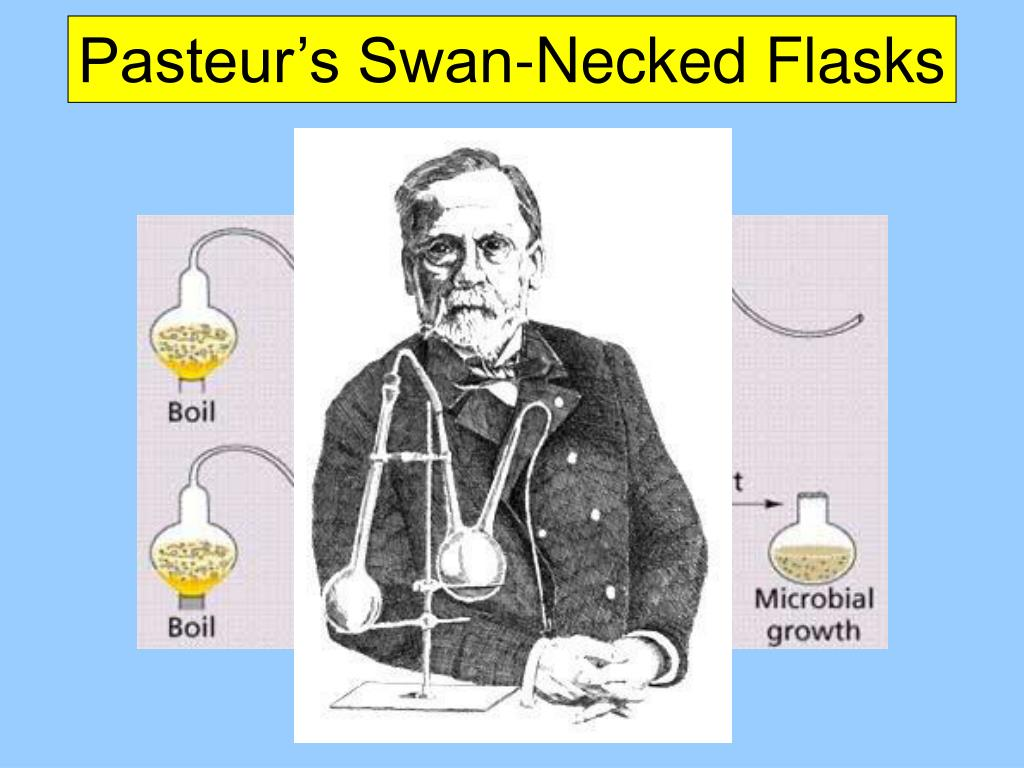 Pasteur's Swan-Necked Flasks