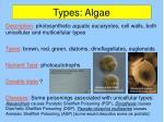 types algae