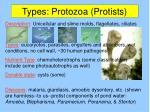 types protozoa protists