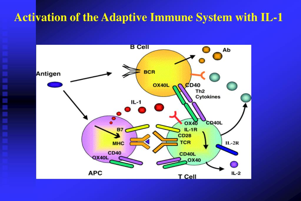 Activation of the Adaptive Immune System with IL-1
