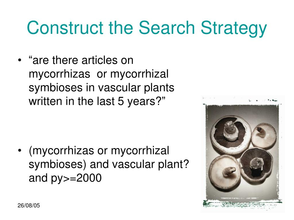 Construct the Search Strategy