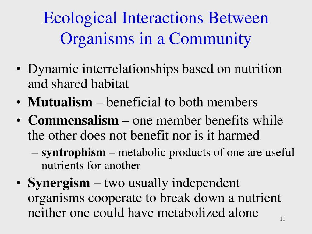 Ecological Interactions Between Organisms in a Community