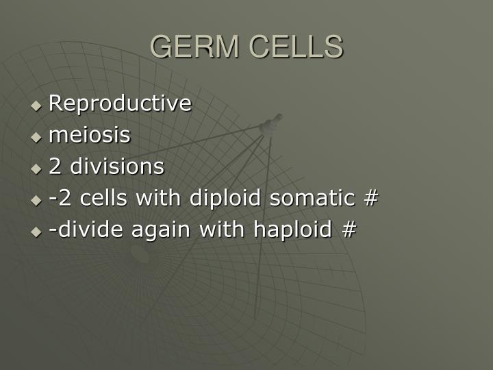 GERM CELLS