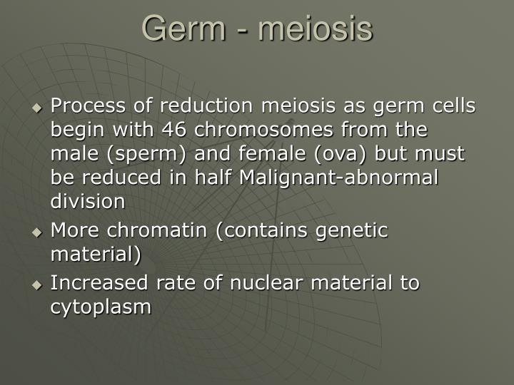 Germ - meiosis