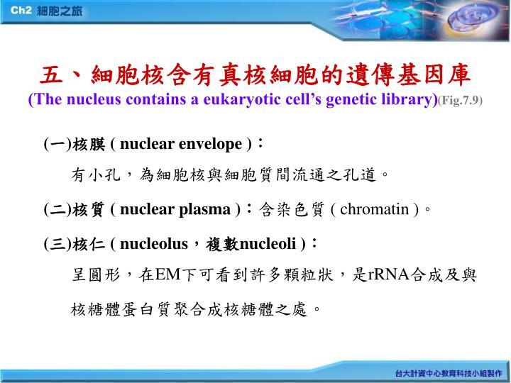五、細胞核含有真核細胞的遺傳基因庫