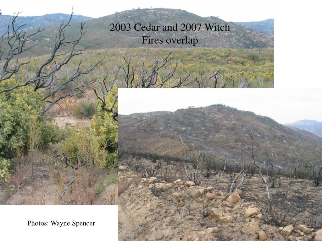 2003 Cedar and 2007 Witch
