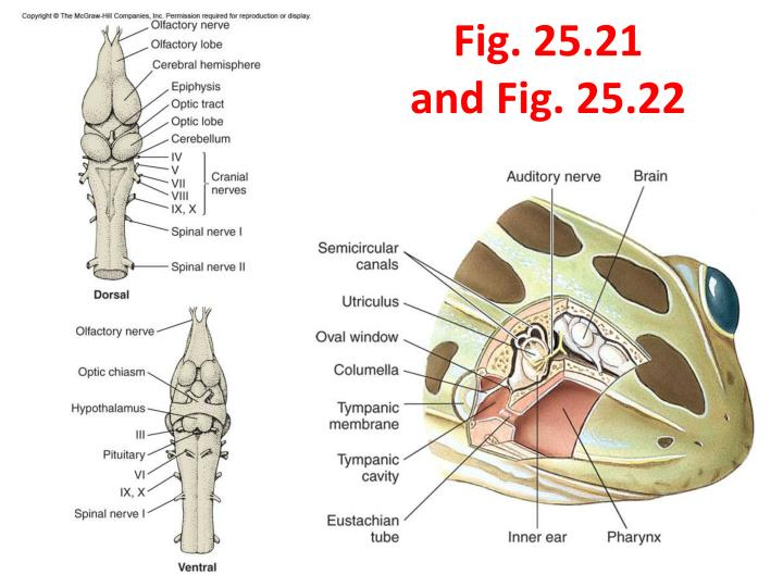 Fig. 25.21