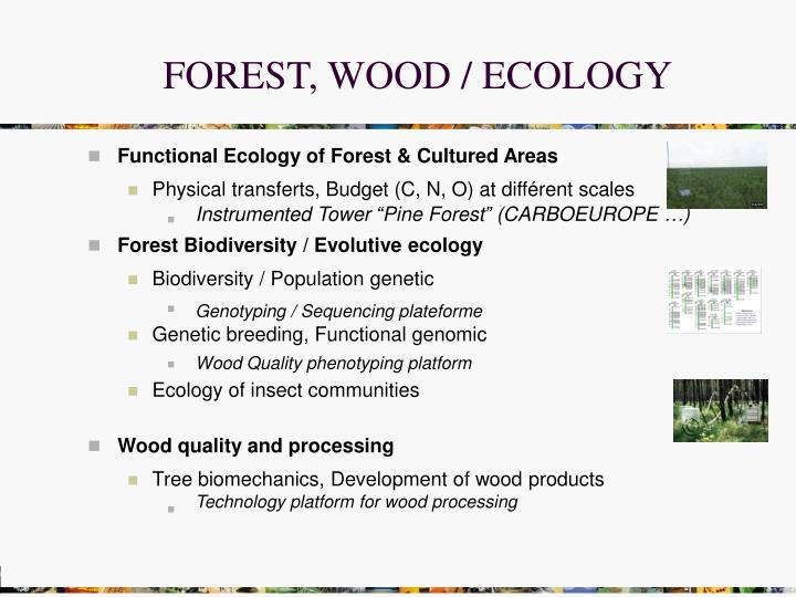 FOREST, WOOD / ECOLOGY