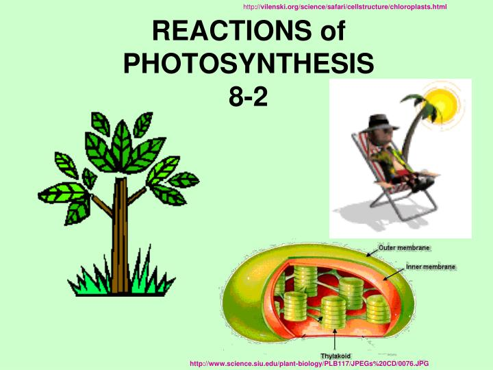 PPT - REACTIONS of PHOTOSYNTHESIS 8-2 PowerPoint ...