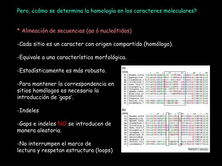 Pero, ¿cómo se determina la homología en los caracteres moleculares?