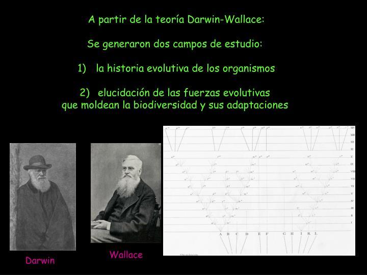 A partir de la teoría Darwin-Wallace: