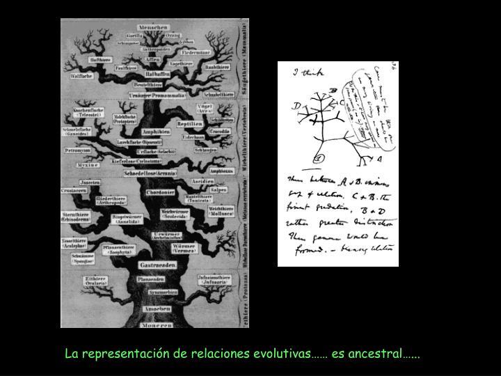 La representación de relaciones evolutivas…… es ancestral…...