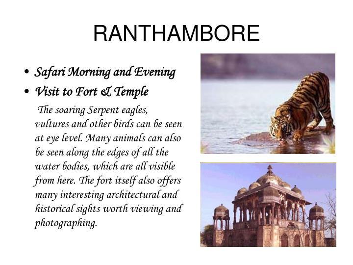 RANTHAMBORE