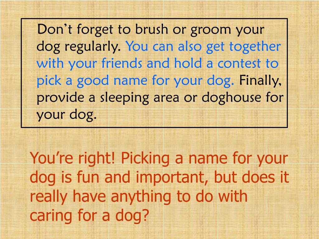 Don't forget to brush or groom your dog regularly.