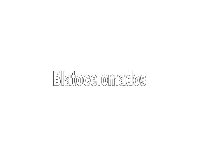 Blatocelomados