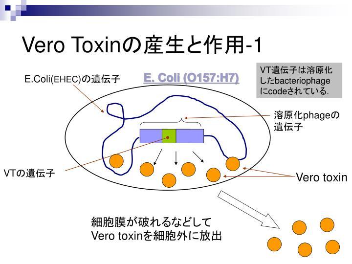 Vero Toxin