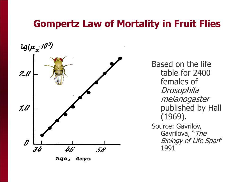 Gompertz Law of Mortality in Fruit Flies