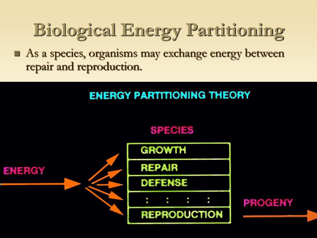 Biological Energy Partitioning