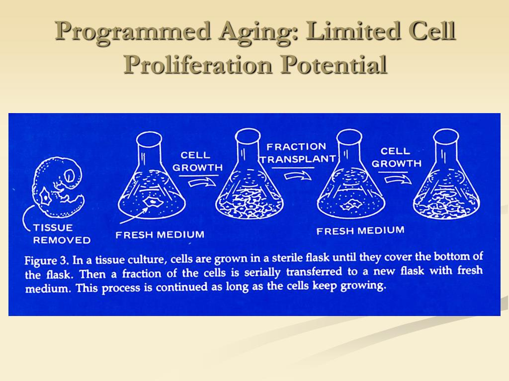 Programmed Aging: Limited Cell Proliferation Potential