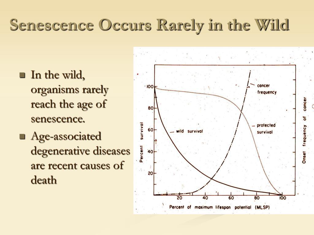 Senescence Occurs Rarely in the Wild
