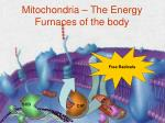 mitochondria the energy furnaces of the body