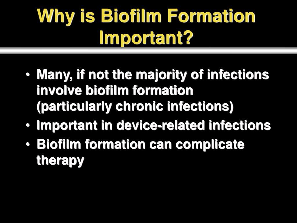 PPT - Multi-species Biofilms PowerPoint Presentation - ID:864768
