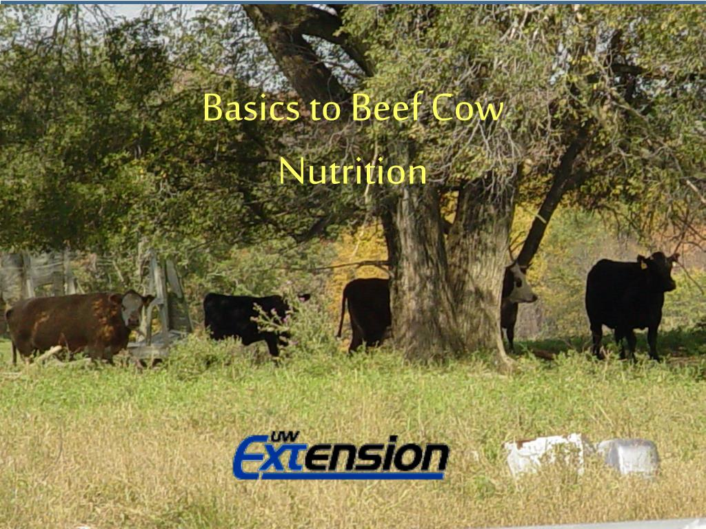 basics to small farm beef cow nutrition l.