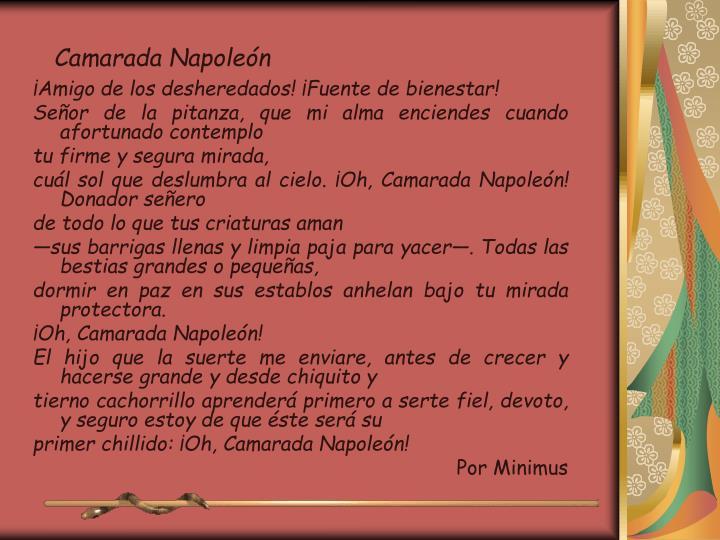 Camarada Napoleón