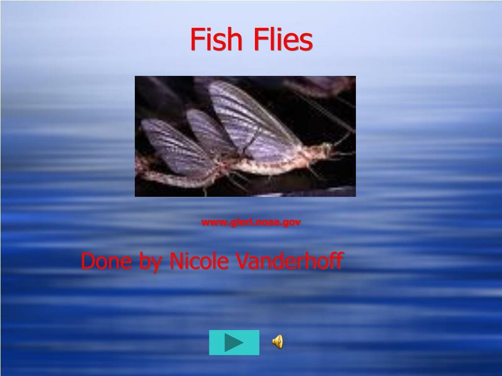 fish flies l.