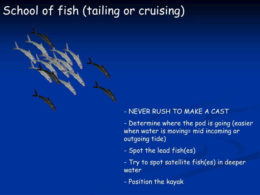 School of fish (tailing or cruising)