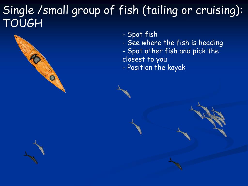 Single /small group of fish (tailing or cruising):
