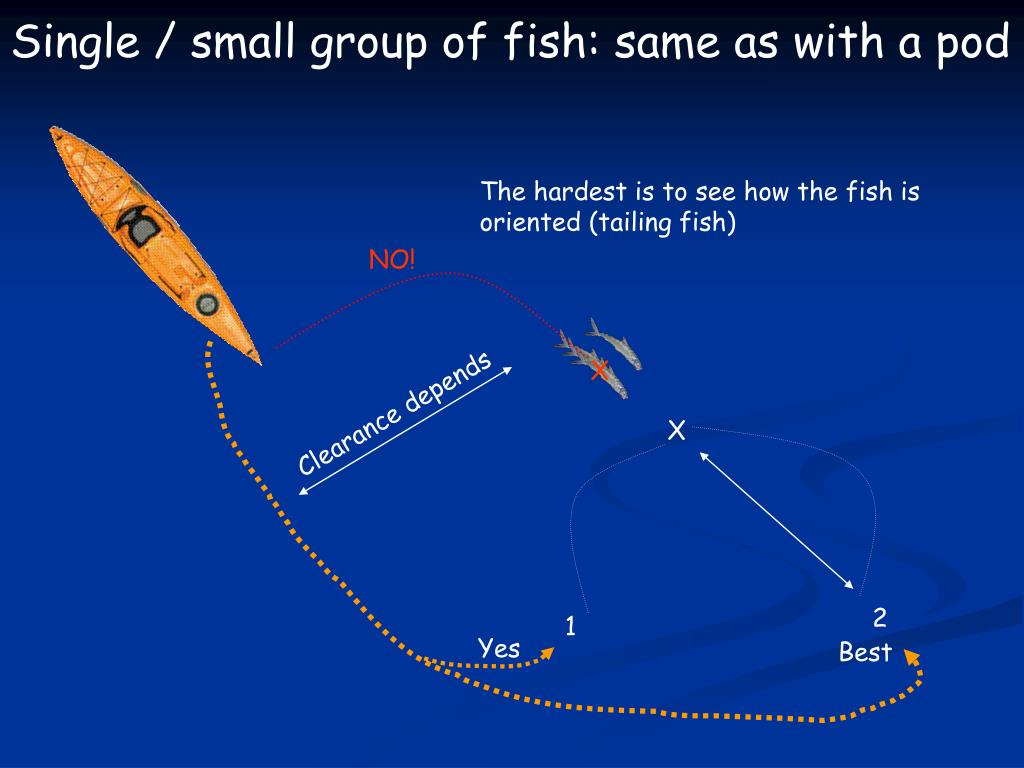 Single / small group of fish: same as with a pod