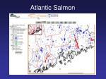 atlantic salmon20