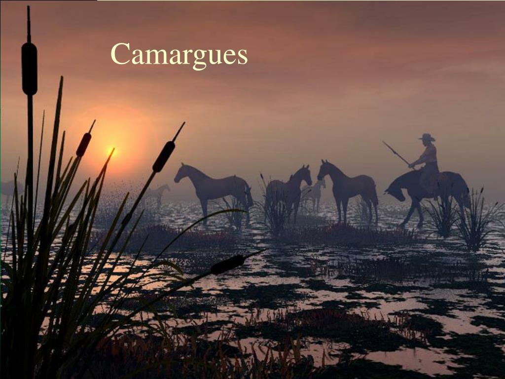 Camargues